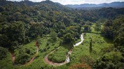 '전혀 새로운' 고대의 문명이 열대 우림에서 발견되다