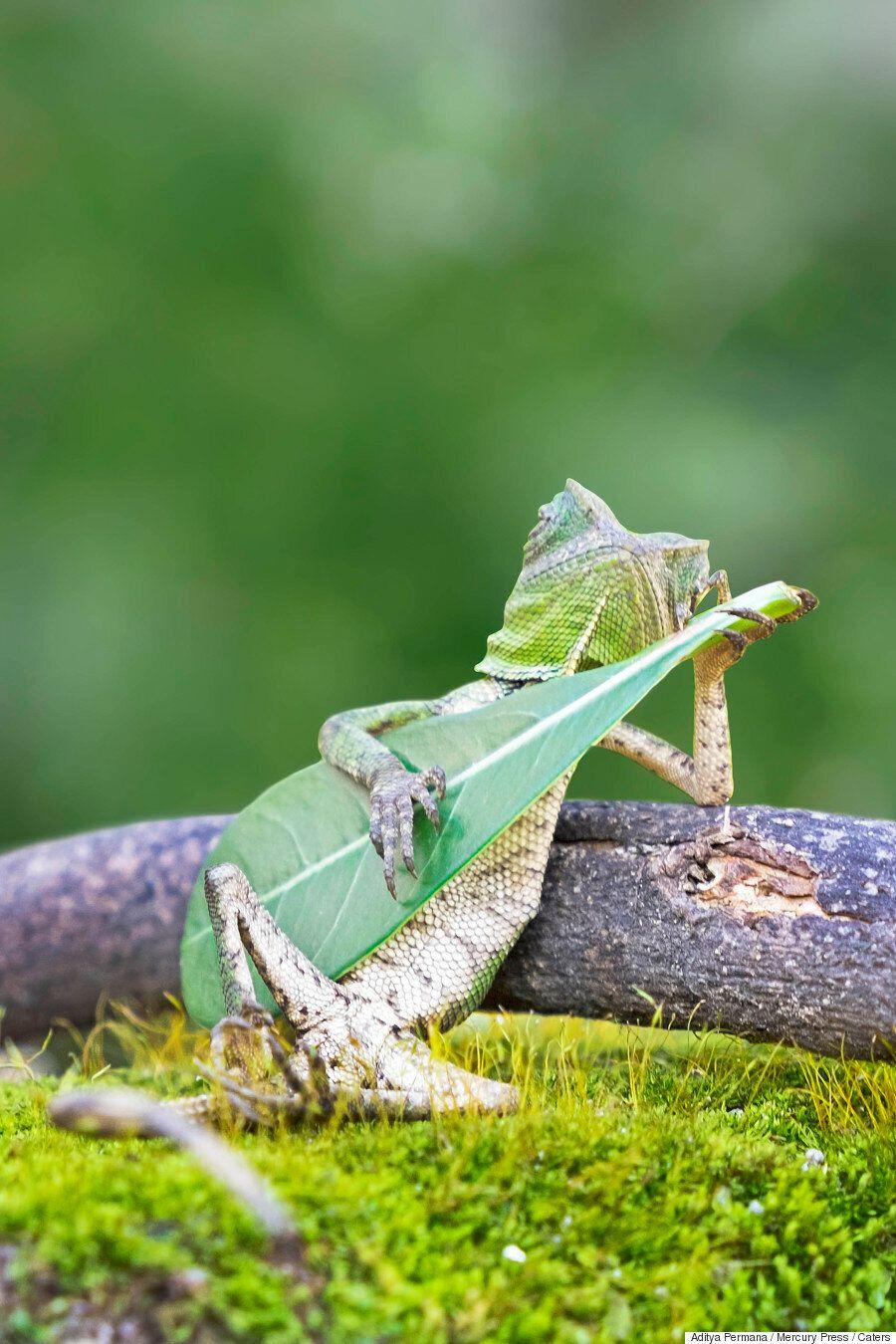 나뭇잎 기타를 치는 세상에서 가장 멋진