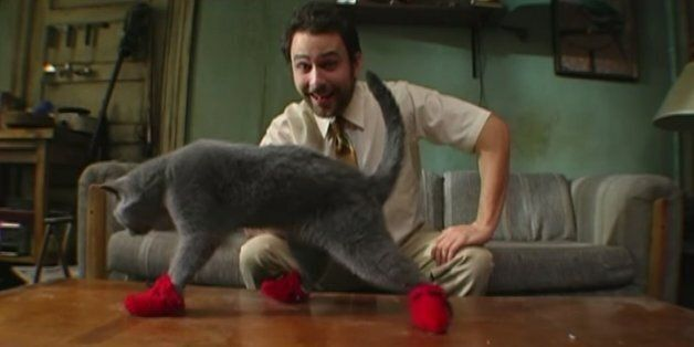 25초보다 짧은 25개의 고양이