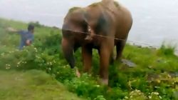 스리랑카의 술 취한 남자가 코끼리에게
