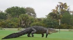 골프장에 나타난 거대한