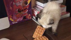 고양이를 빵또아로 음해한