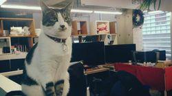 고양이와 개를 기를 수 있는 직장