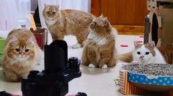 고양이 VS 로봇 : 최고로 귀여운