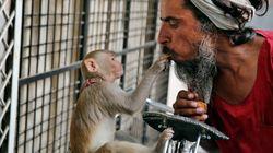 애완 원숭이에게 전 재산 남긴 인도