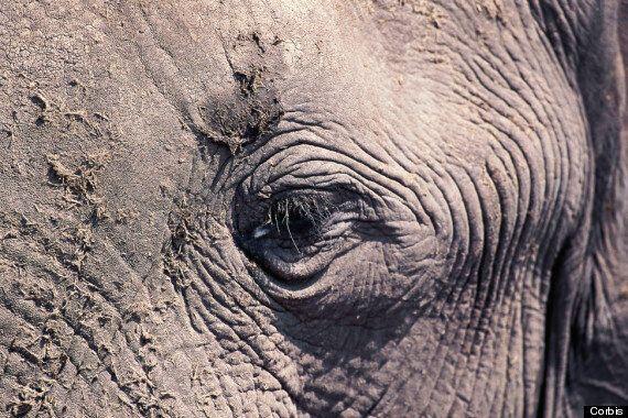 코끼리 상아 무역: 모두 금지해야