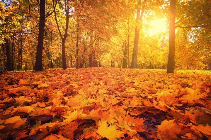 Les jolies couleurs des forêts pendant l'automne ne suffisent pas à booster le moral des Français.