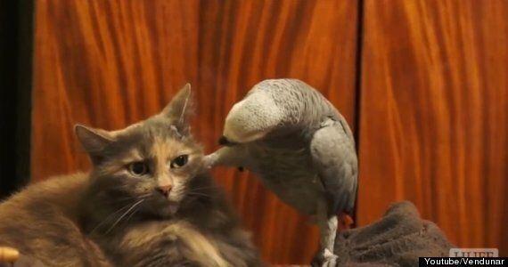 앵무는 고양이와 놀고