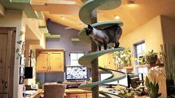 길고양이를 위해 집을 개조한