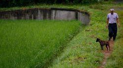 후쿠시마 쌀, 처음으로 방사능 검사