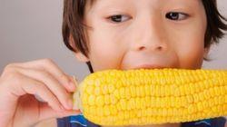 전국 18곳서 'GMO 옥수수·면화'