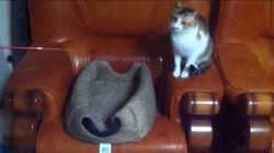 고양이와 낚싯대로