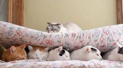 잘자고 있는 친구들을 깨우는
