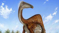 2014년에 새롭게 발견된 놀라운 공룡