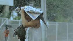 비가 내리면 우산이 되는