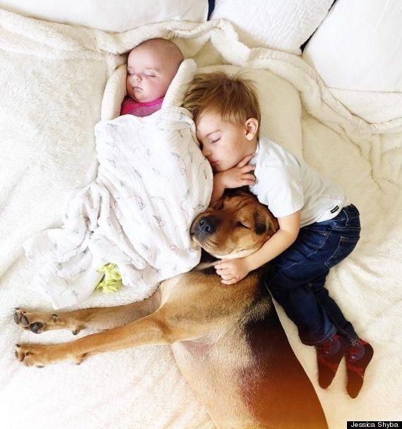함께 낮잠에 빠진 두 아기와 개