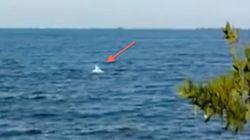 희귀한 알비노 돌고래가 카메라에