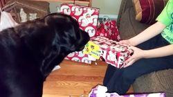 입으로 선물 포장 뜯어주는 개