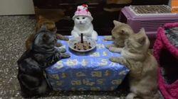 사랑하는 고양이에게 생일파티를 열어줬다