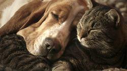 2014년 구글에서 가장 많이 검색한 개, 고양이