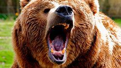 진주 동물원서 곰이 사자를