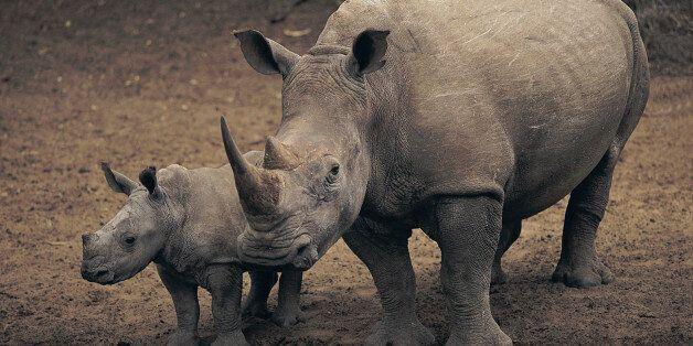 우리가 야생동물 불법거래 퇴치에 나서야 하는