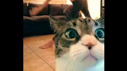 2014년 최고의 고양이 동영상