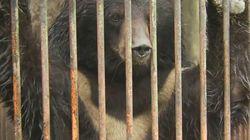 진양호동물원, 사자 죽기 열흘 전 반달가슴곰도
