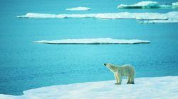 온난화로 북극곰이 절반으로