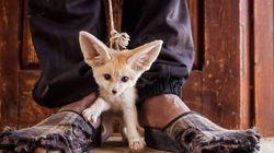 BBC 주관 올해의 야생동물 사진전