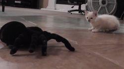 고양이와 거미의 '귀여운'