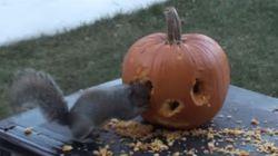 다람쥐가 할로윈 호박을