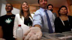 칠레, 의료용 마리화나 재배