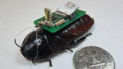 '사이보그 바퀴벌레'의