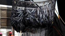 바다 생태계와 우리의 미래를 파괴하고 있는