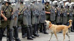 그리스 '시위 개' 죽다(사진,
