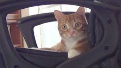 고양이랑 컴퓨터 앞에서 일하겠다고?