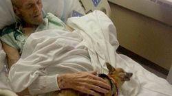 병상에서 애완견과 재회한 노인, 회복하다
