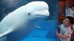 자연서 50년 사는 돌고래, 수족관에선