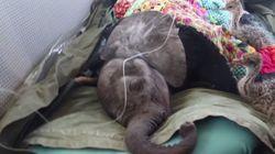 고아 코끼리와 고아 타조의