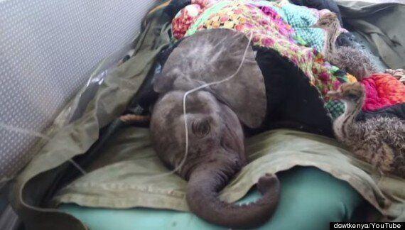 고아 코끼리와 고아 타조들의 우정