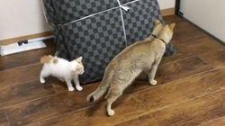 승자 없는 술래잡기는 고양이만이 할 수 있다!