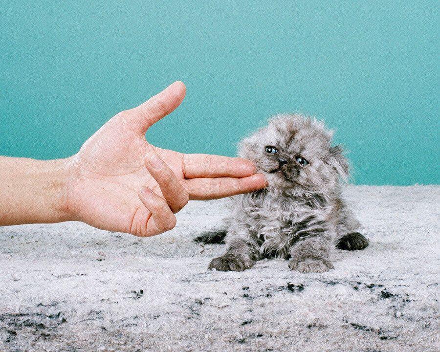 예술 사진 작가들이 찍은 놀라운 고양이