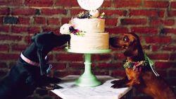 당신의 결혼식보다 더 멋진 개들의