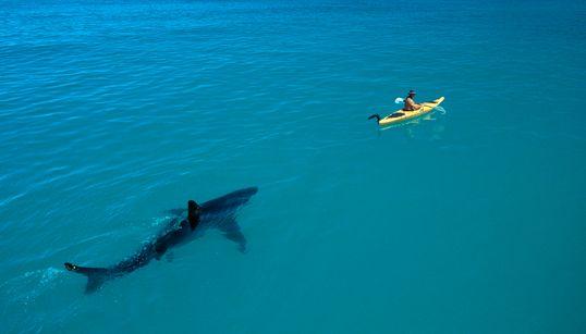 상어, 멸종의