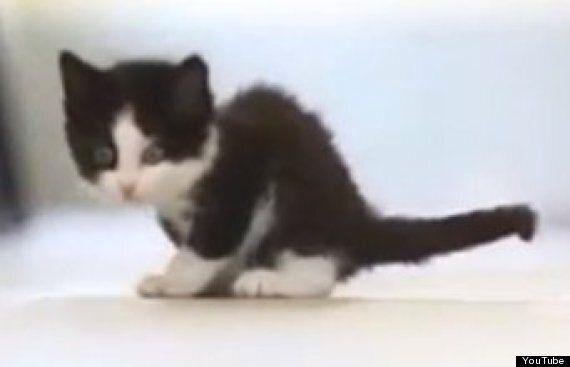다리가 3개뿐인 새끼 고양이 벨 :