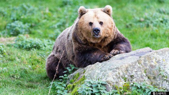 동물을 가두지 않는 '휩스네이드 동물원'을