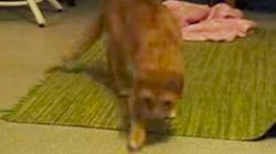 고양이의 천적은 바나나?