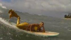 인어들이 서핑에 도전하다!