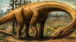 지구 역사상 가장 큰 공룡 화석이